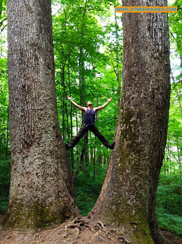 adam laufer world treehouses asheville joyce kilmer