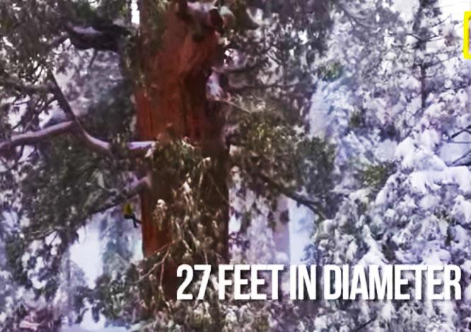 world-treehouses-giant-sequoia