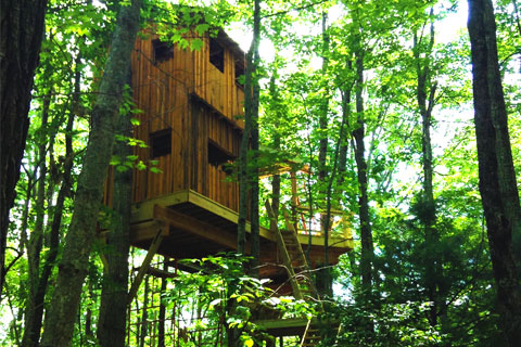 world-treehouses-brevard-asheville