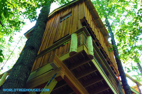 brevard treehouse world treehouses nc - Biggest Treehouse In The World 2016