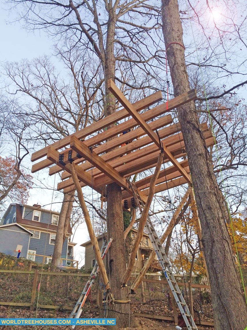 tree house builder Asheville