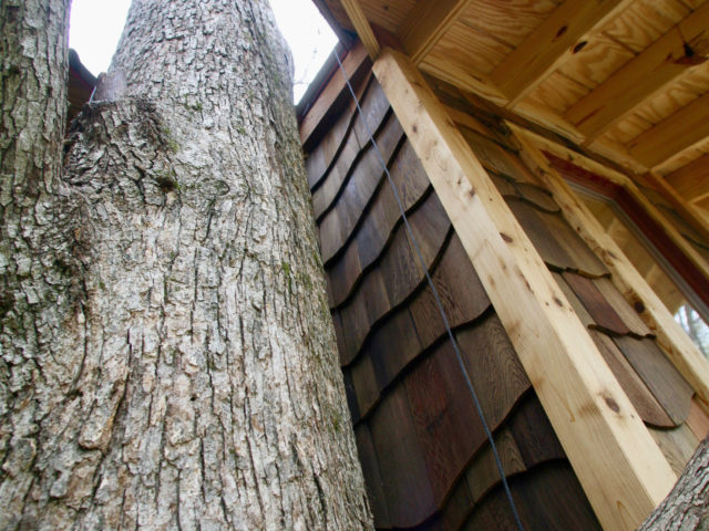NC treehouse builders: Building with the grace and beauty of the trees