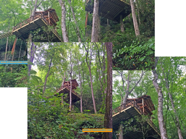 WNC tree house builder:View from Below