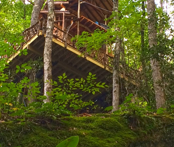 NC treehouse builders : Panthertown lush setting view from below