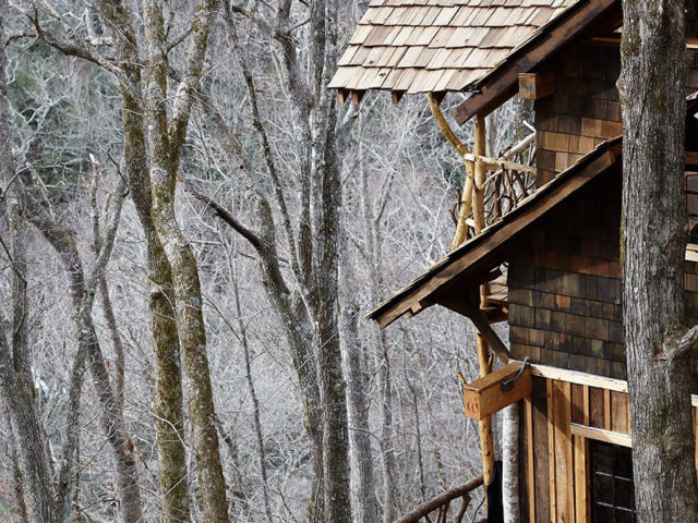 WNC tree house builders : A tree house dream fulfilled!