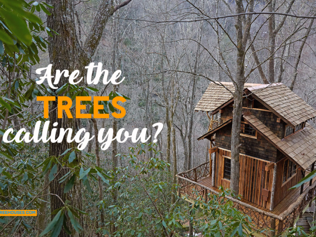 WNC treehouse builders : Are the trees calling you?