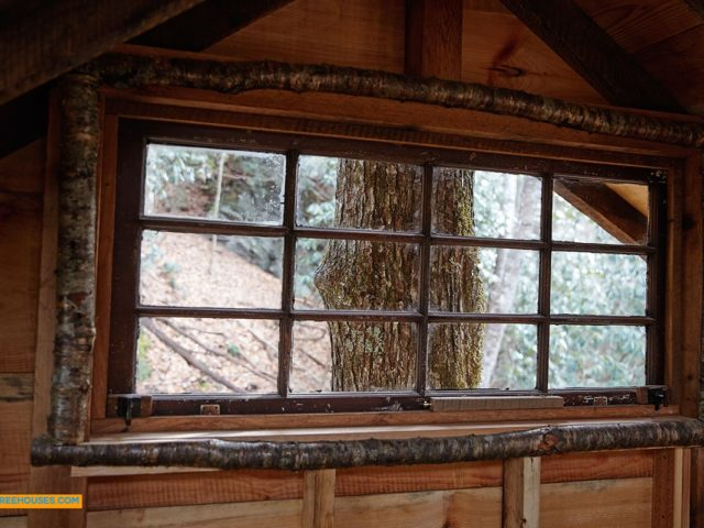 WNC treehouse builders : Window into the World of a Tree