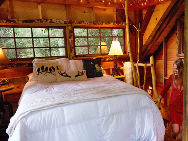 Asheville tree house builder: Panthertown Treehouse: Deep rest in the forest's embrace